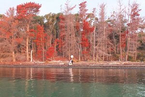 Wedding couple view from water with red trees background